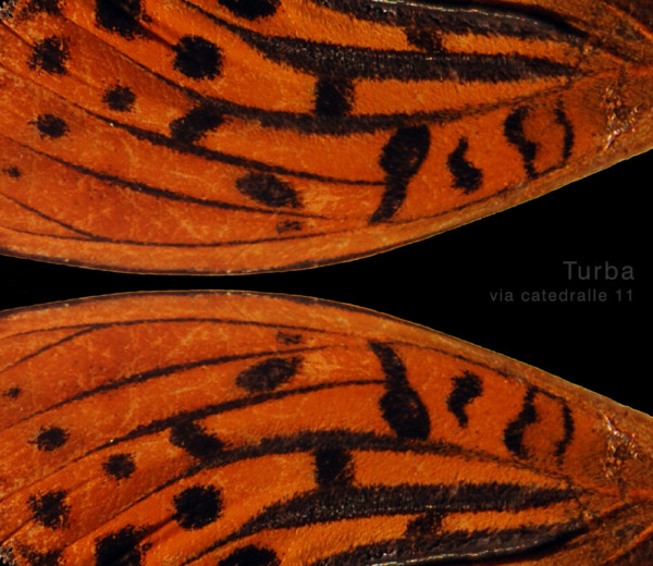 Turba Live II